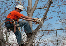 Trimming Trees